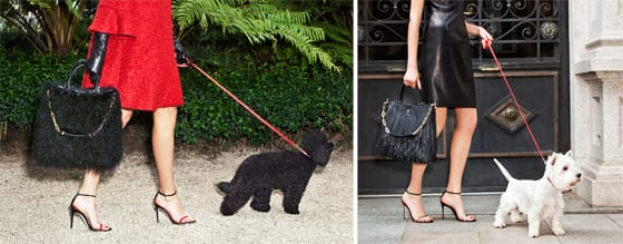 CH Carolina Herrera_Gaspar_poodle_ et_Gaspar _scottish