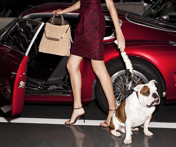 CH Carolina Herrera_Gaspar_bulldog